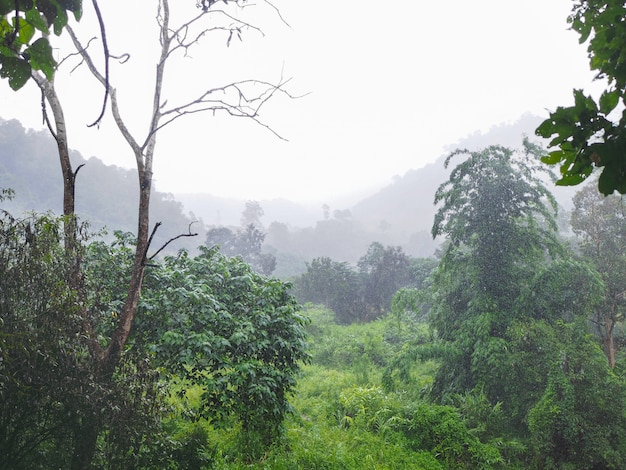 Heavy raining in the tropical green forest