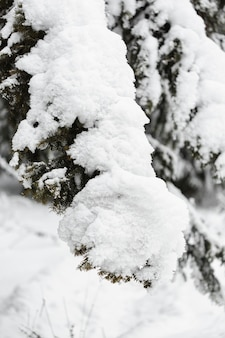 Heavy snow over branches of trees close-up