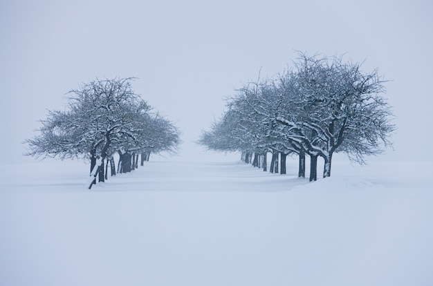 Heavy snowfall in extreme winter covered trees and pathway
