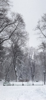 Heavy snowstorm in the park. vertical panorama made from 5 images.