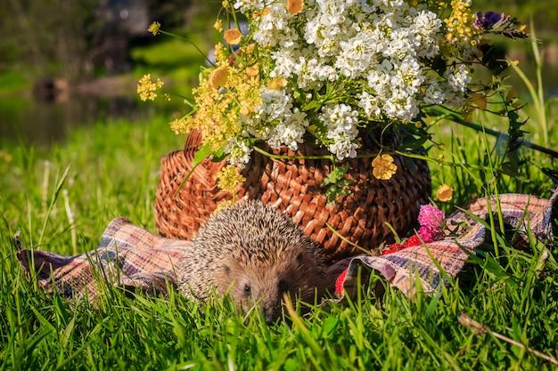 Ежик в траве с клубникой на фоне плетеной корзины