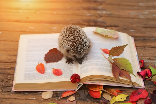 Hedgehog open book autumn leaves wooden table
