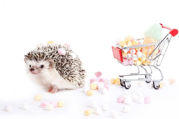 Hedgehog and shopping trolley with candies