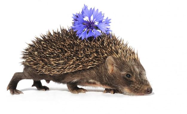 Ежик с цветком