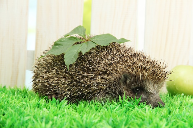 Hedgehog with leaf and apple, on grass,  on fence background