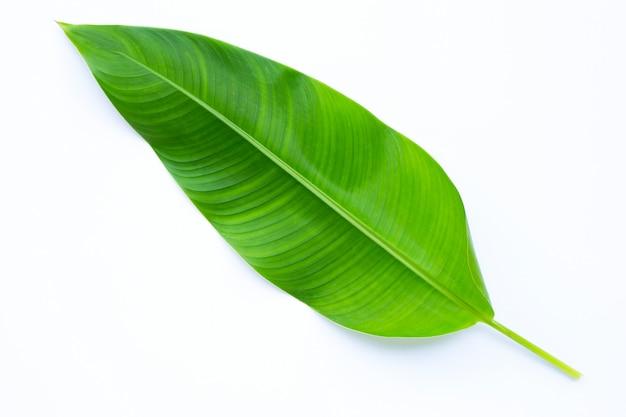 白い背景のヘリコニアの葉。
