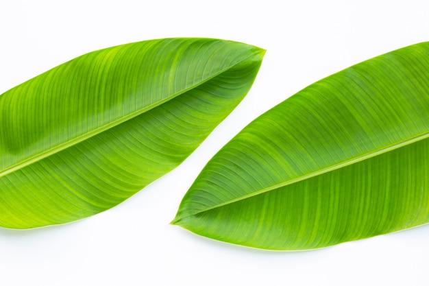 Heliconia листья на белом фоне.