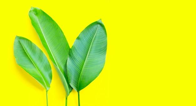 Heliconia는 노란색 배경에 나뭇잎. 공간 복사