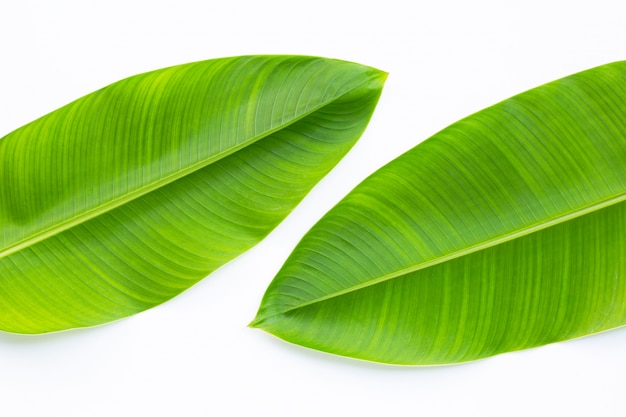 Heliconia leaves on white background.