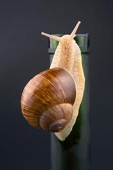 헬릭스 포 마티아. 어두운 표면에 병에 포도 달팽이. 연체 동물과 무척추 동물. 미식가 단백질 고기 음식.