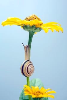 헬릭스 포 마티아. 작은 달팽이 꽃에 크롤 링. 연체 동물과 무척추 동물.