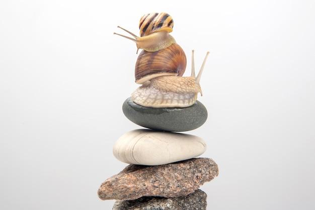 リンゴマイマイ。石のピラミッドの上にカタツムリ。軟体動物と無脊椎動物。珍味肉とグルメ料理