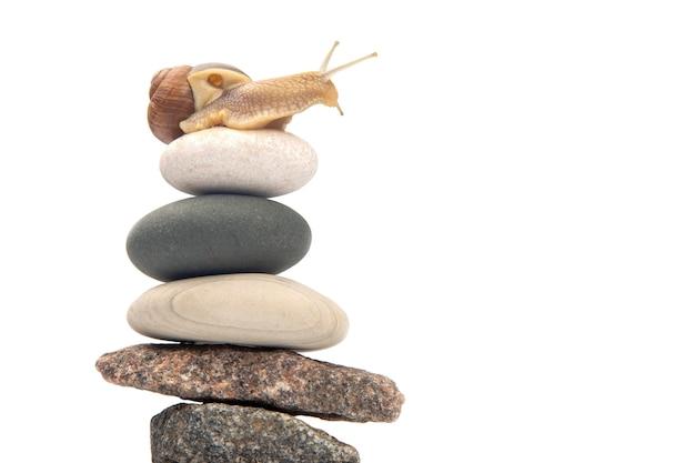 Helix pomatia. snail on top of a stone pyramid.