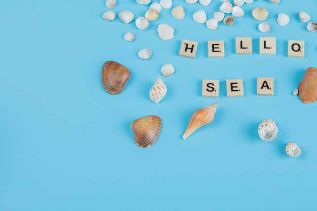 Hello sea quote on blue surface with sea shells around