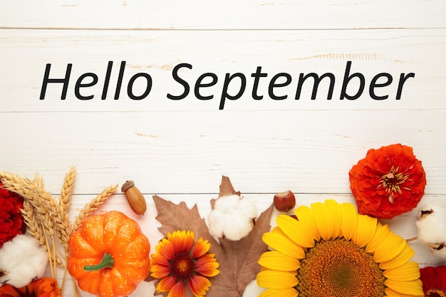 Hello september message with different autumn flowers on white wooden background.