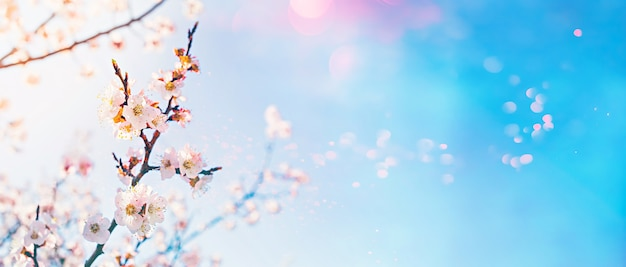 Hello spring concept. flowering fruit tree with lens flare bokeh on sunny sky background