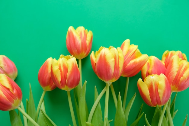 Hello, spring with fresh yellow-red tulips on a dark green background. concept of international women's day, mother's day, easter