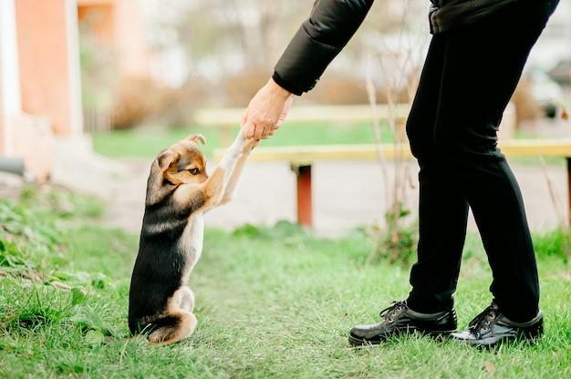 動物を助け、ホームレスの小さな若い子犬が女性に足を差し出した