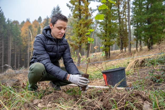 Helping the forest after an ecological disaster by planting out young trees