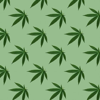 Hemp or cannabis leaves seamless pattern. close up of fresh cannabis leaves on green background