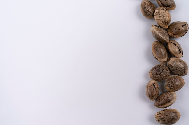 Семена конопли на белом фоне в ряд. рамка из сухих семян конопли. семена конопли.