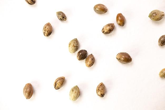 흰색 바탕에 대마 씨앗입니다. 평면도