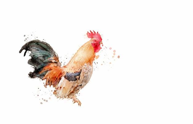 Положение курицы, изолированные на белом фоне. акварельный стиль.