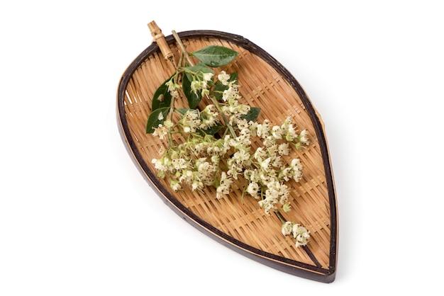 ヘナまたはローソニアイネルミスの花は白い背景で隔離。上面図、フラットレイ。