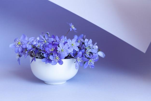 Свежий букет из нежных весенних цветов печеночника hepatica nobilis в белой вазе на синем бумажном завитке