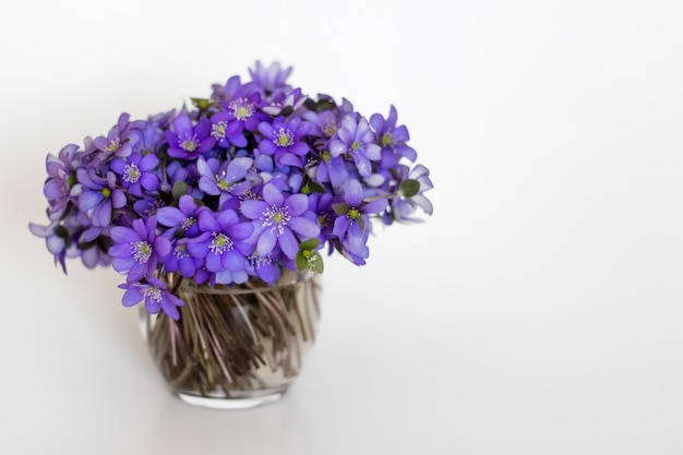Hepatica purple flowers in a small glass vase