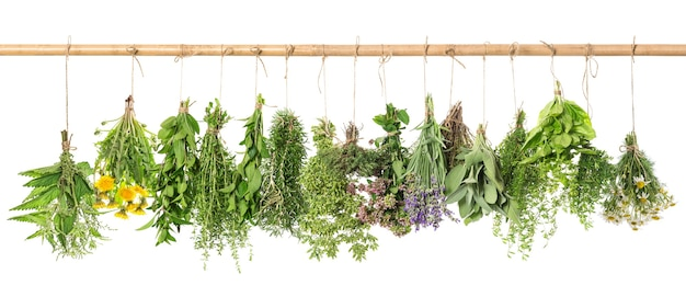 Herbal apothecary. fresh herbs hanging isolated on white background. basil, rosemary, sage, thyme, mint, oregano, marjoram, savory, lavender, dandelion, camomile, nettle