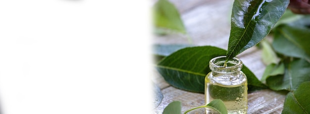 Herbal essential oil in a small bottle