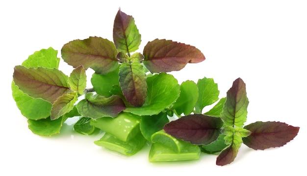 초본 식물