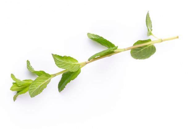 Травяная специя на белом столе.