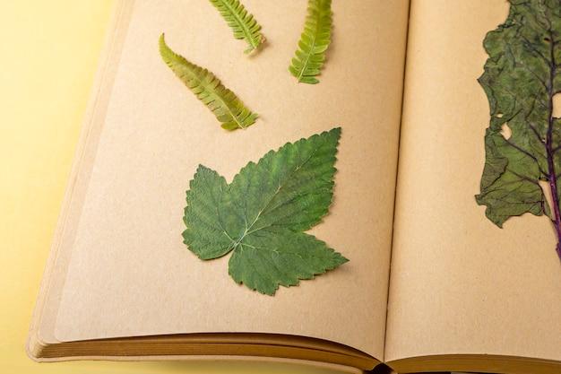 Гербарий разнообразных прессованных сушеных растений на листах старинной тетради, травник. ботанический набор полевых цветов, трав. плоская планировка осенней композиции, копирование пространства для текста