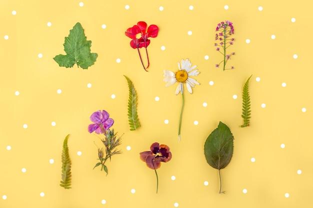 Гербарий разнообразных прессованных сушеных растений на желтом фоне. ботанический набор полевых цветов, трав. плоская планировка осенней композиции цветочный фон
