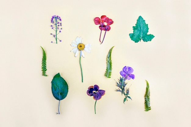 Гербарий разнообразных прессованных сушеных растений на желтом фоне. ботанический набор полевых цветов, трав. плоская планировка осенней композиции,