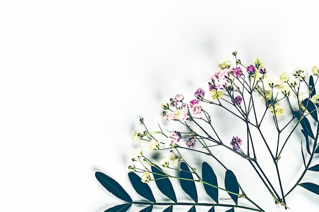 緑の小枝を持つ野花の植物標本。上からの眺め。植物の花の背景。