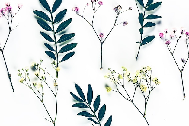 Herbarium of wildflowers with green twigs view from above botanical flower background