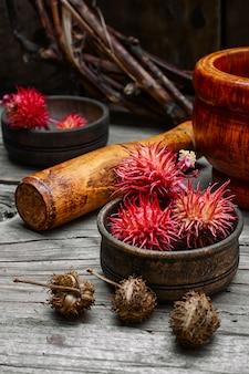 Herbs alternative medicine