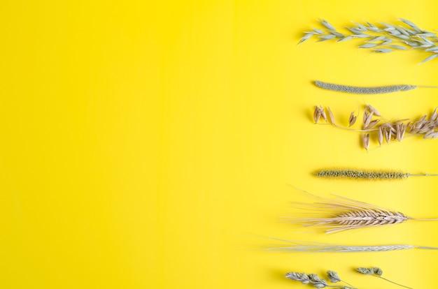 乾燥したハーブ-黄色の背景にライ麦、オーツ麦、フォックステール、オートミール