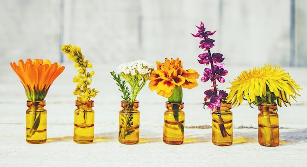 Herbs. medicinal plants. selective focus. homeopathy herbs.
