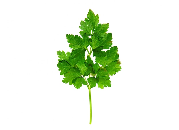 Herbs parsley leaf