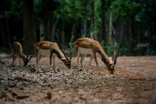 Herd of deers in a forest