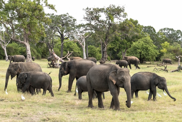 Herd of elephants in a natura landscape