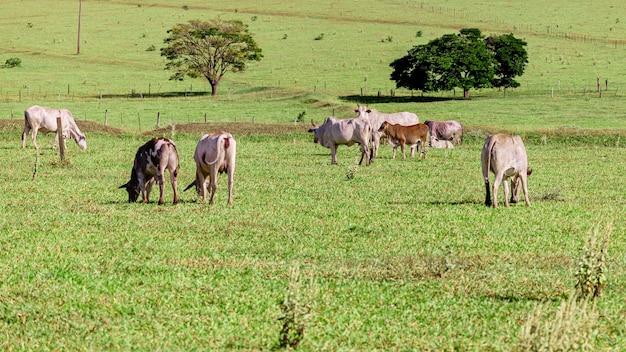 美しい晴れた日に放牧する群れ。