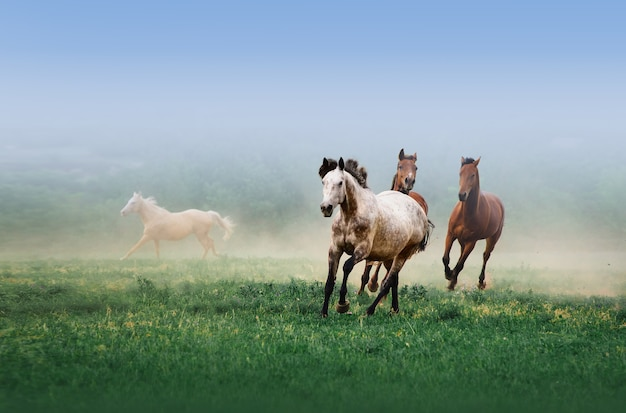A herd of horses galloping in the mist on the green grass.