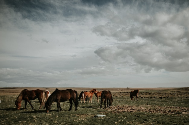 Herd of horses grazing in a field under the beautiful cloudy sky