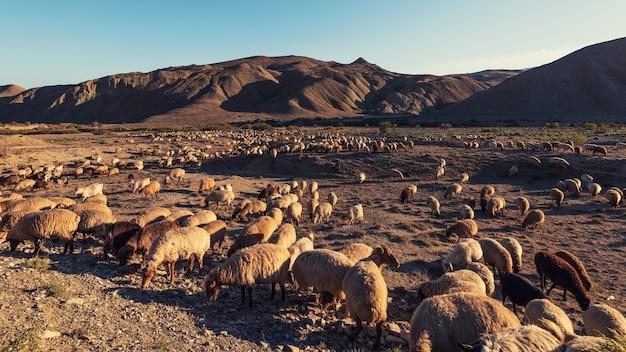 Herd of livestock in the pasture