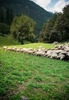 Стадо крупного рогатого скота, пасущееся на зеленых полях